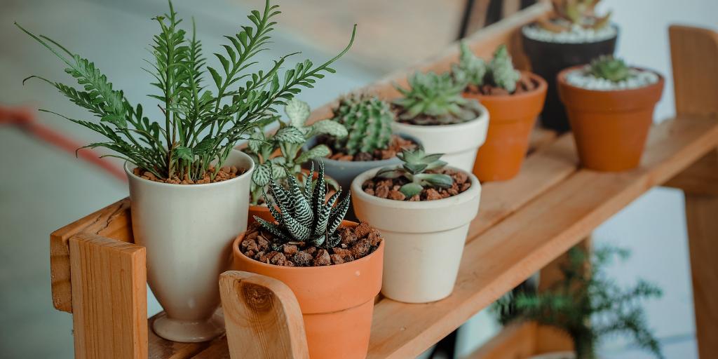 Tener plantas en casa mejora el aire que respiramos