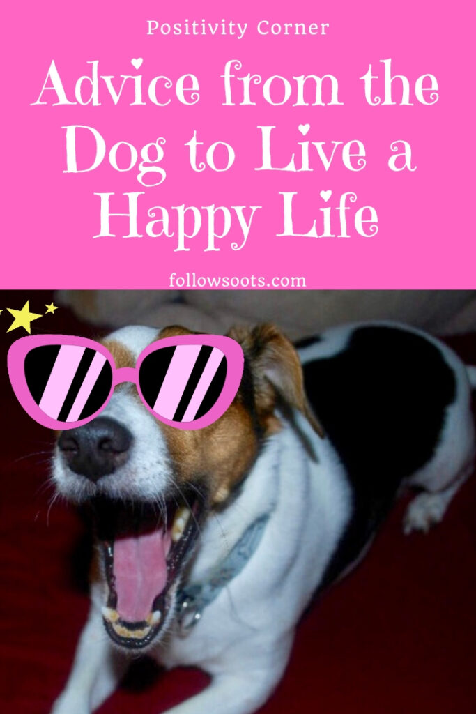Advice from my dogs to live a happy Life