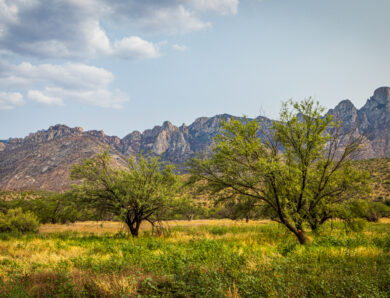 Hiking in Tucson – Best for Adventure, Families & Fun
