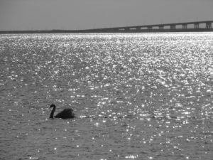 bridge with swan--b-w.eps