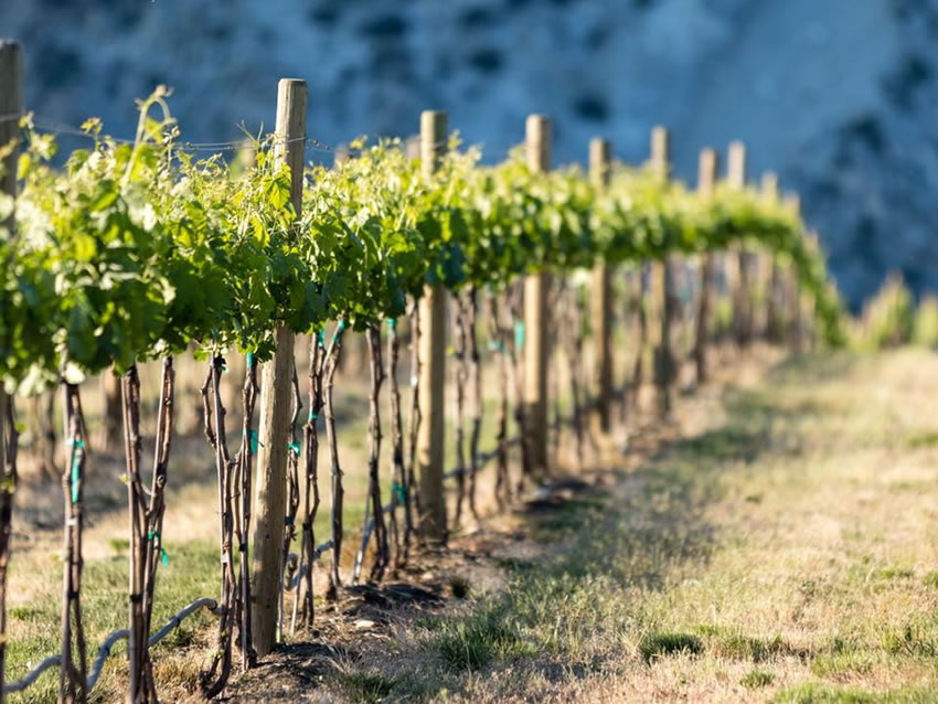 Rocky Pond Winery Double D Vineyard
