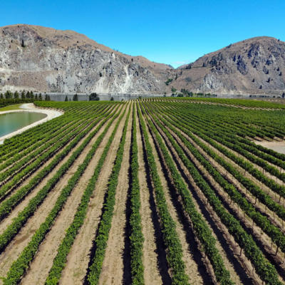 Rocky Pond Winery Our Vineyards