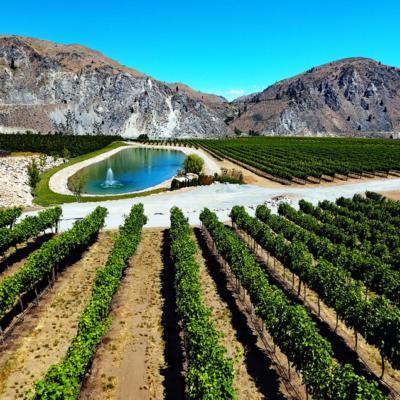 Rocky Pond Double D Vineyard