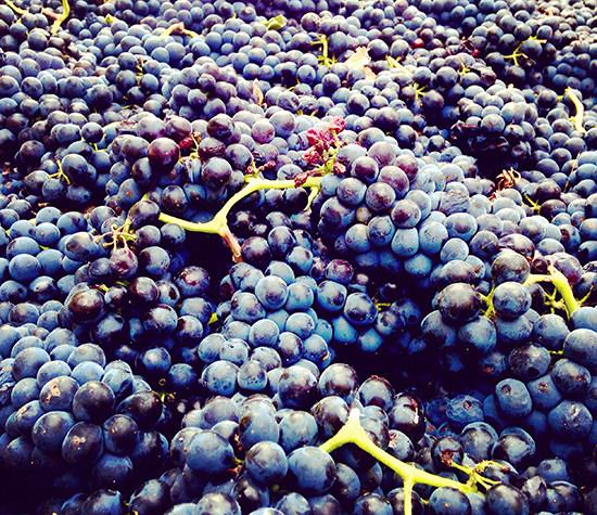 Rocky Pond Winery Orondo, Wa