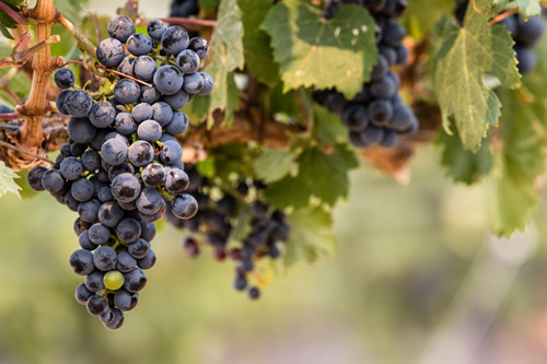 72 hours in Cascade Valley Wine Country