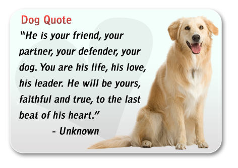 Dog Lovers Our Promise - Dog Lovers Tarpon Springs
