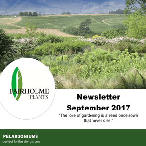 201709 Fairholme Plants newsletter: Pelargoniums. Writer and designer Anna Mouton.