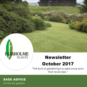 201710 Fairholme Plants newsletter: Sage advice for the dry garden. Writer and designer Anna Mouton.