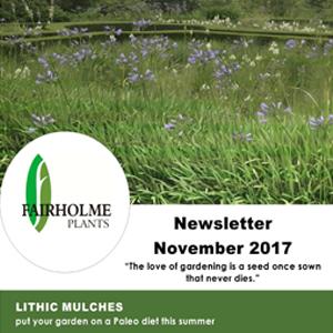 201711 Fairholme Plants newsletter: Lithic mulches. Writer and designer Anna Mouton.