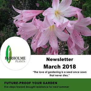 201803 Fairholme Plants newsletter: Future-proof your garden. Writer and designer Anna Mouton.