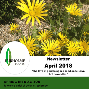 201804 Fairholme Plants newsletter: Spring into action. Writer and designer Anna Mouton.