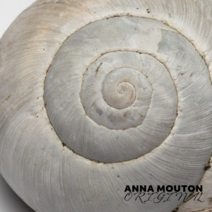 Bleached shell of snail — Cornu aspersum. Photo by Anna Mouton.