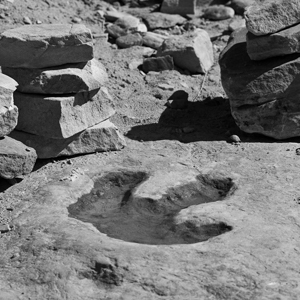 Stock photo of dinosaur footprint for Pokémon Go for paleontologists written by Anna Mouton. Photo by Greg Willis.