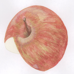 Watercolor of a red apple for an infographic. Graphic by Anna Mouton.