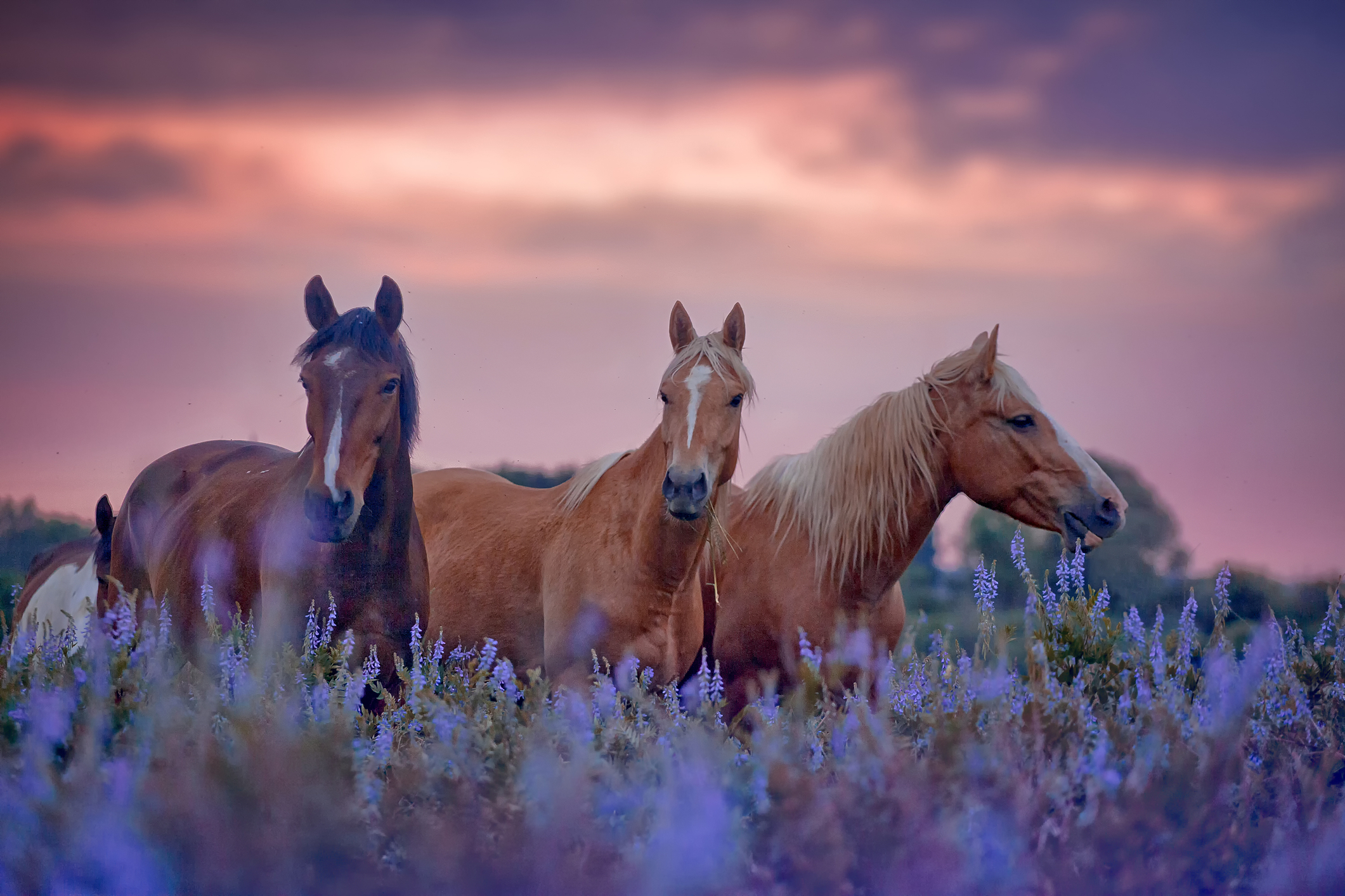 THE HORSE AS AN ARCHETYPE FOR TRANSFORMATION BLAIR MCKISSOCK HEALING WITH HORSES