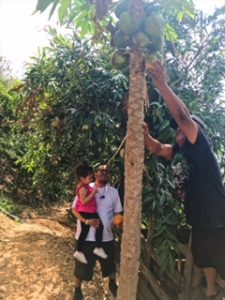 Our Trip to Oaxaca City Mexico - Picking fruit