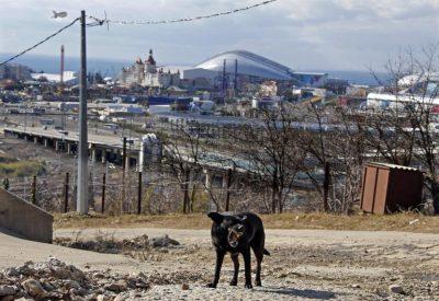 sochie-stray-dogs-6feb2014
