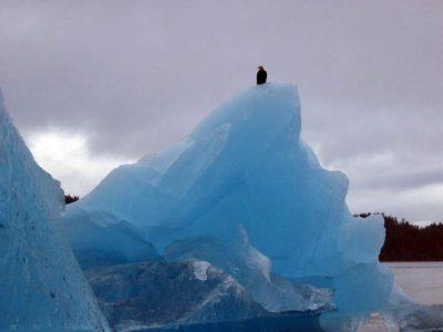 an-eagle-sits-on-a-glacier_w725_h544