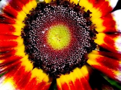seeds-of-flower-close-up-725x544