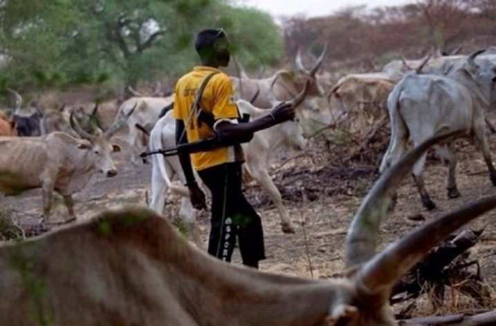 The herds, the herdsmen and men in Nigeria