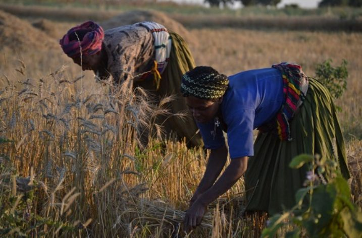 Ethiopia: Surplus, sustainable yield oriented agricultural research