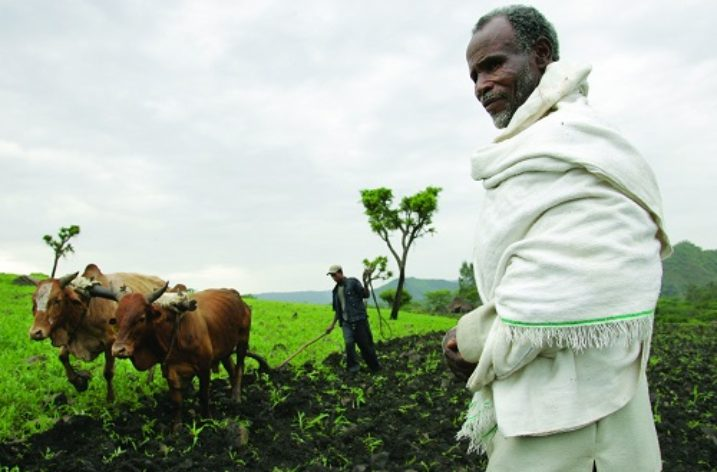 Ethiopia: Insurance protecting small scale farmers from uncertainties
