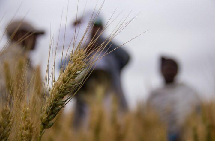 Tedla Abebe's Agricultural Cornucopia