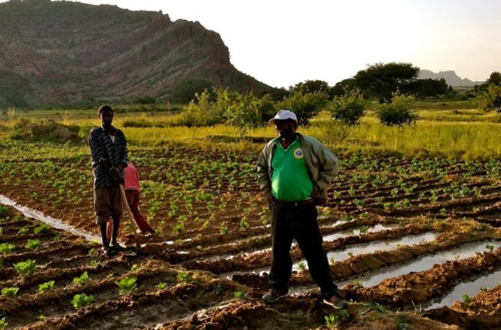 Ethiopia: Agricultural products supply raw materials and boost exports