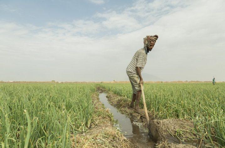 Raising awareness for economical usage of irrigation water