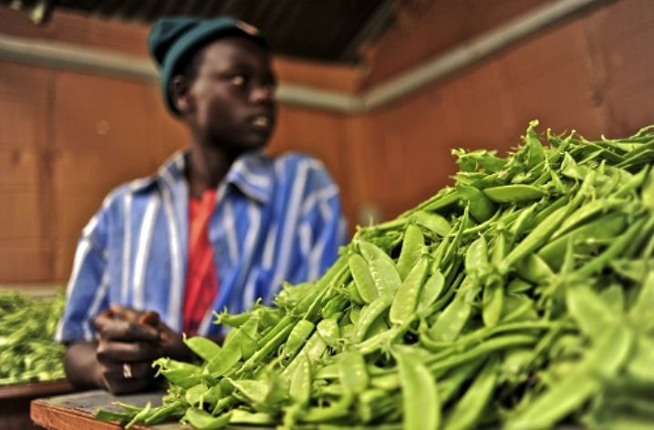 Youth for Sustainable Food Security
