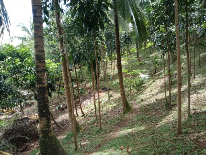 Farm-lot-for-sale-5635-square-meter5