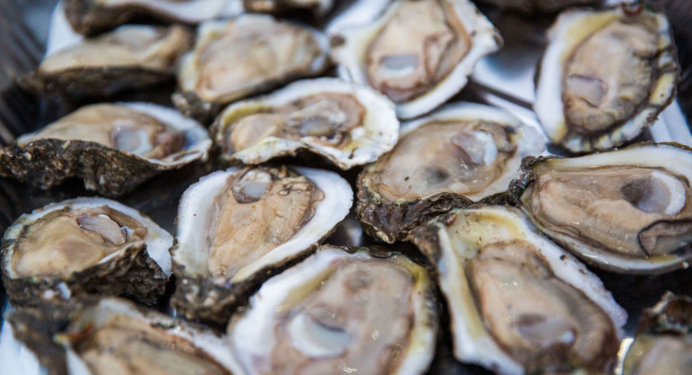 Bucktown Seafood Fest