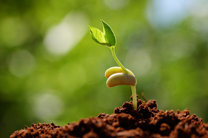 """""""I Am His Seed"""""""