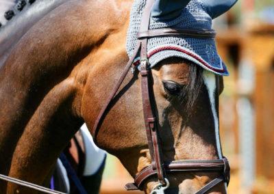 Horse Ribbon 3