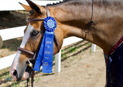 Horse Ribbon