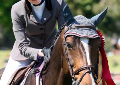 Horse face 1