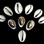 cowrie-shells-1404348901-jpg