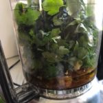 Parsley in food processor for the Chicken Chimichurri Rojo. It is broiled or grilled Chicken topped with a cool, fresh, tangy, and incredibly full-flavored! The Rojo comes from the addition of red pepper. All of the ingredients simply get blended in a food processor so it could not be easier! #chicken #chickenrecipes #chimichurri #easychicken #easydinners #dinner