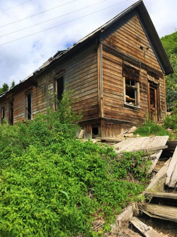 Hops grow near an old house in Summit County. Photo courtesy of Summit Land Conservancy.