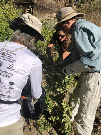 Hops Harvest - Harvesting at Empire Canyon
