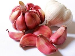 garlic health benefits facts