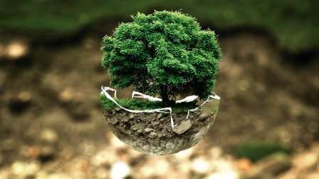 Bonsai tree symbolism