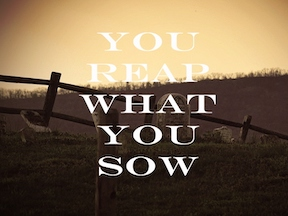 IF YOU PLANT YOU WILL REAP