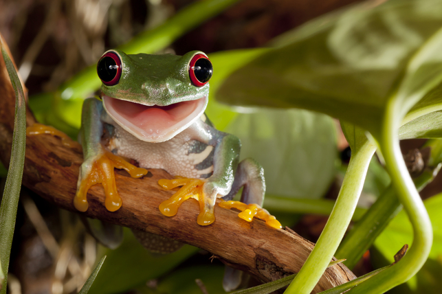 smiling green frog on a branch 2
