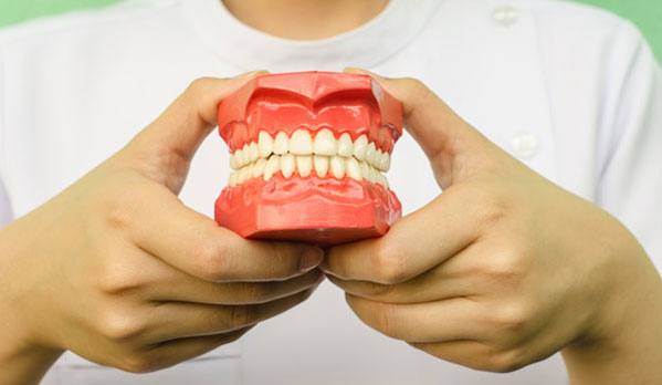 person holding model of teeth 5
