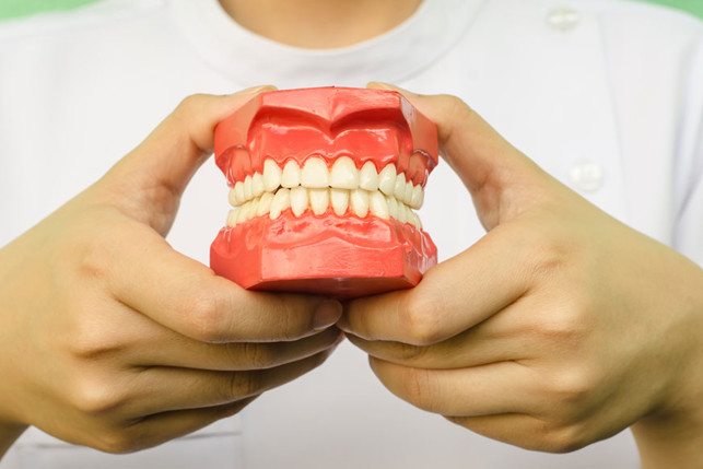 person holding model of teeth 2