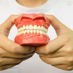 person holding model of teeth 6