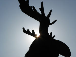 Moose Population Relatively Low