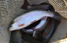 Trout season opener- Photo Credit: Minnesota DNR