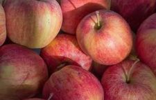 Apple orchards open for season